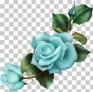 Blue Rose Drawing Flower PNG