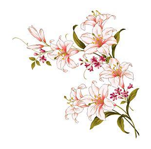 Lilium Candidum Flower Arum-lily PNG