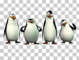 Madagascar: Operation Penguin Kowalski Skipper PNG, Clipart