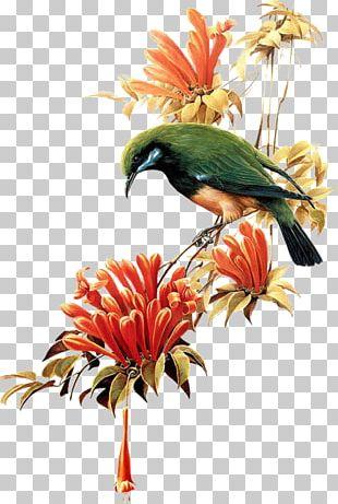 Bird T-shirt Flower PNG