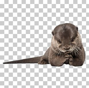 IPhone 6 Plus IPhone 4 Sea Otter IPhone 5s PNG