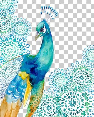 Peafowl Watercolor Painting Drawing Feather PNG