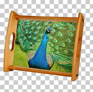 Pavo Bird Asiatic Peafowl Feather Animal PNG