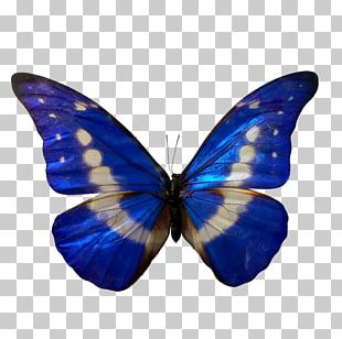 Butterfly Insect Morpho Blue Color PNG