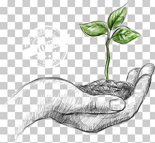 Natural Environment Environmental Protection Sustainability World Environment Day PNG