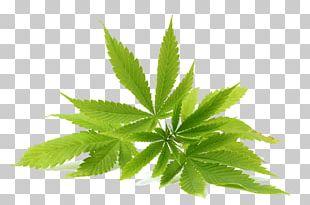 Cannabidiol Cannabis Hemp Oil PNG