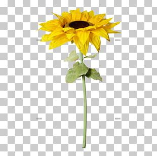 Common Sunflower Artificial Flower Plant Stem Cut Flowers PNG