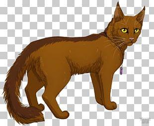 Whiskers Kitten Warriors Cat Tigerstar PNG