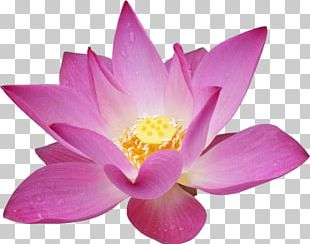 Massage Lotus Flower Png Images Massage Lotus Flower Clipart Free
