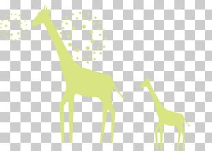Giraffe Deer Illustration PNG