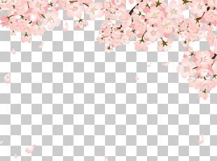 Cherry Blossom Copyright-free Illustration PNG