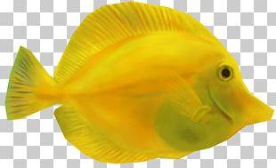 Coral Reef Fish Yellow Tang Animal PNG