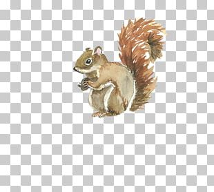 Squirrel Watercolor Painting Template PNG