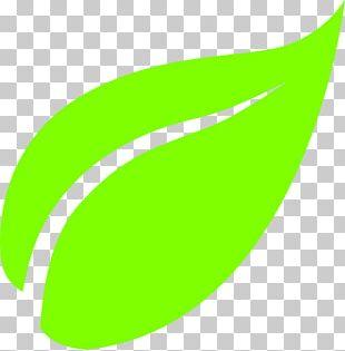 Green Tea Masala Chai White Tea Leaf PNG