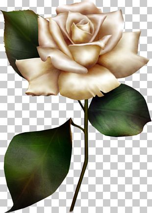 Painted White Rose PNG