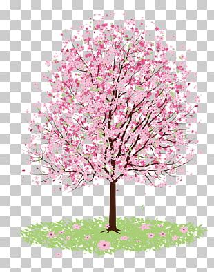 Cherry Blossom Drawing Tree PNG