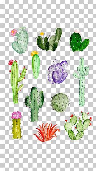 Cactaceae Drawing Watercolor Painting Succulent Plant PNG