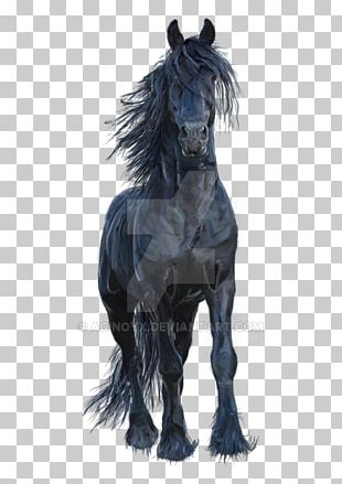 Friesian Horse Stallion Mustang Arabian Horse Pony PNG