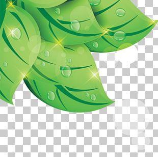 Leaf Green Drop PNG