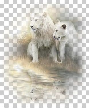 White Lion Painting Cat Art PNG