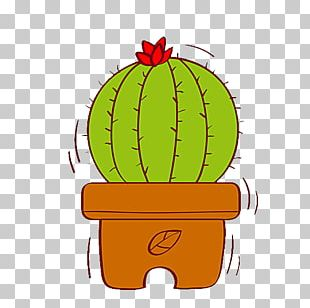 Cactaceae Succulent Plant Prickly Pear Drawing Illustration PNG
