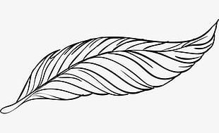 Beautiful Peacock Feather Artwork PNG