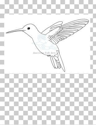 Line Art Drawing Fauna Beak Feather PNG