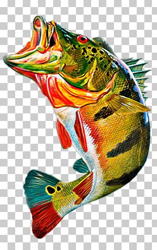 Cichla Ocellaris Peacock Bass Fly Fishing PNG