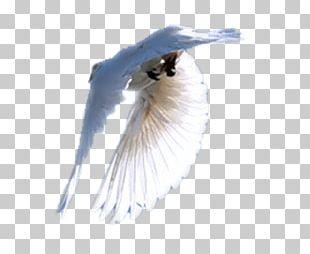 Close-up Eyelash Feather Beak PNG