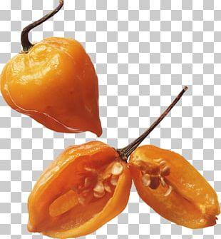 Habanero Vegetarian Cuisine Chili Pepper Capsicum PNG