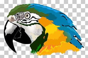Amazon Parrot Macaw PNG
