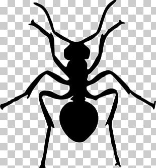 Ant Insect Silhouette PNG