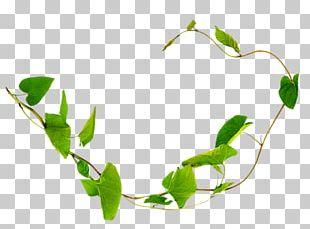 Liana Field Bindweed Plant Vine Thorns PNG