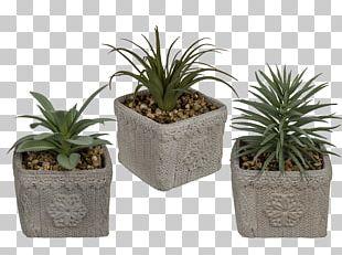 Flowerpot Cactaceae Rhipsalis Houseplant PNG