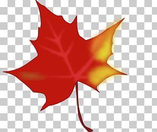 Autumn Leaf Color Computer Icons PNG