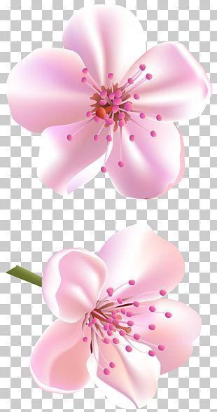 Flower Rose Pink Color PNG