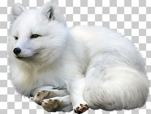 Arctic Fox Gray Wolf Idea Champagne PNG
