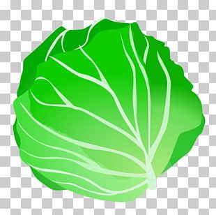 Cabbage Vegetable PNG