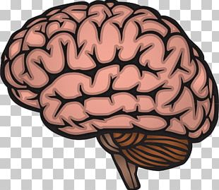 Human Brain Drawing Nervous System PNG
