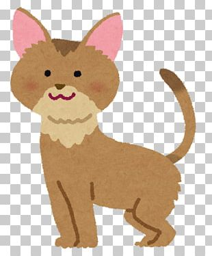 Whiskers Abyssinian Cat Maine Coon American Shorthair Cat Food PNG