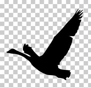 Bird Goose Silhouette Duck PNG