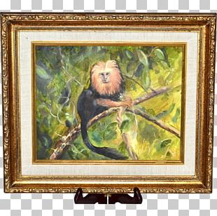 Golden Lion Tamarin Still Life Frames Oil Painting PNG