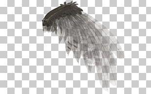 Angel Wing Rendering PNG