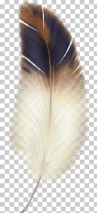 Feather PNG