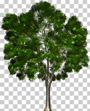 Tree Forest Kinoteatr Art PNG