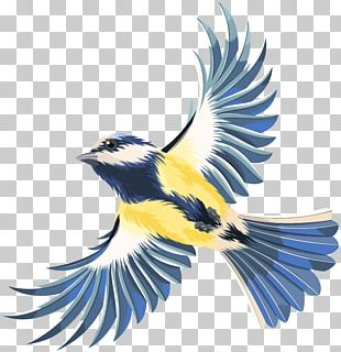 Bird Flight Bird Flight PNG
