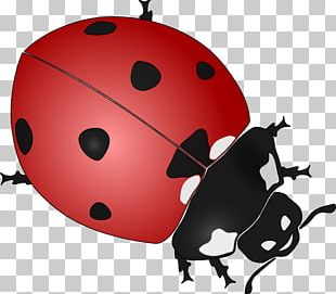 Beetle Ladybird Drawing Black And White PNG