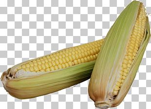 Corn On The Cob Sweet Corn Maize Cereal Fastiv PNG