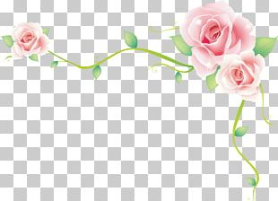 Rose Border Rose Sea PNG