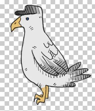Bird Of Prey Beak Art PNG